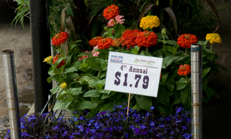 Flowering annuals outside Boulder Creek Hardware